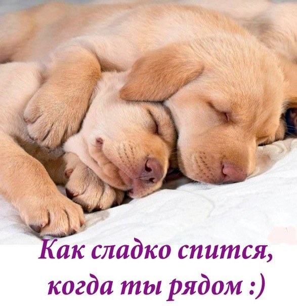 Картинки спокойной ночи солнышко сладких снов